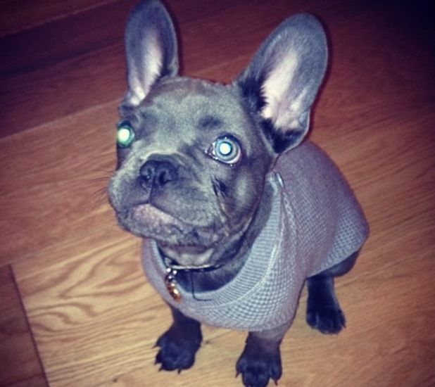 Millie Mackintosh takes French bulldog Herby to Harrods shopping