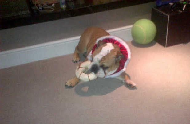 Tulisa uploads picture of pet dog with Christmas toy