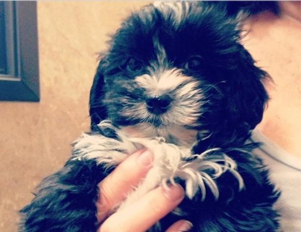 Miranda Cosgrove's puppy Penelope