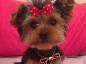 Jessica Wright's cute dog Bella, 9 April 2013