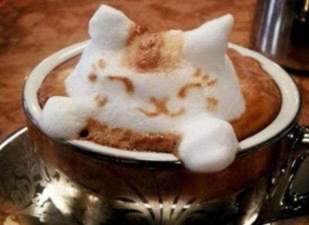 A foam cat