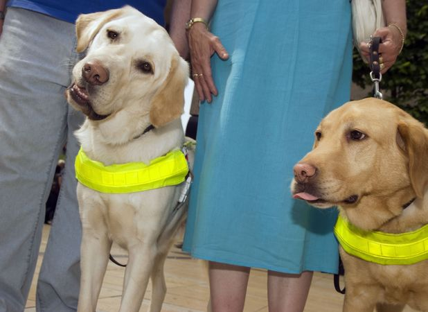 Stock image of guide dogs and owners