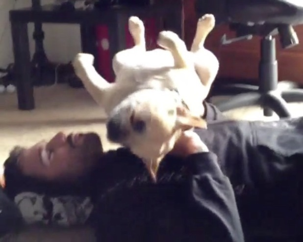 Brody Jenner weight lifts his dog Chunk - 12 July 2013