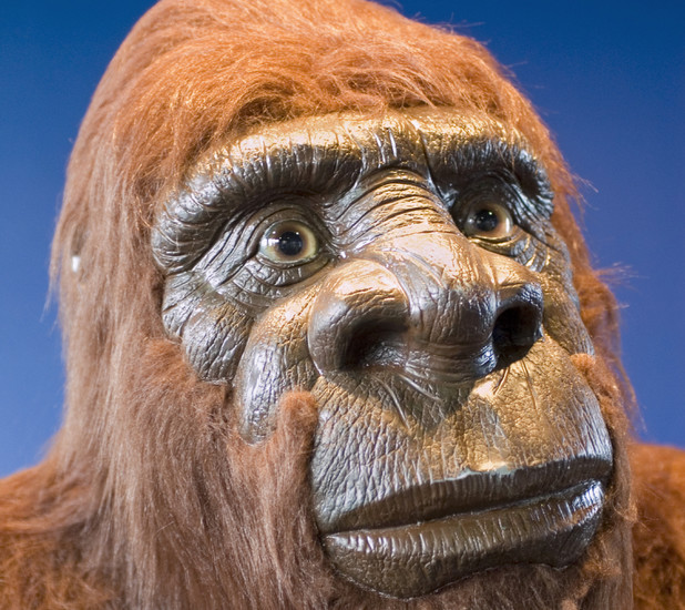 Someone called up the RSPCA to say they'd seen Bigfoot