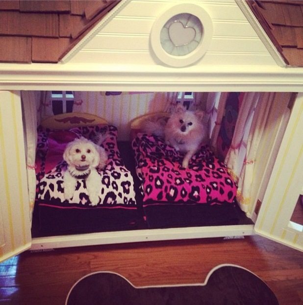 JWoww shares pictures of her dogs in their fancy dog house - 3 September 2013