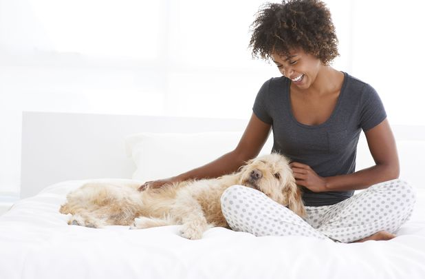 Model Released - Black Woman Petting Dog On Bed, Toronto, Ontario, Canada 15 Dec 2012