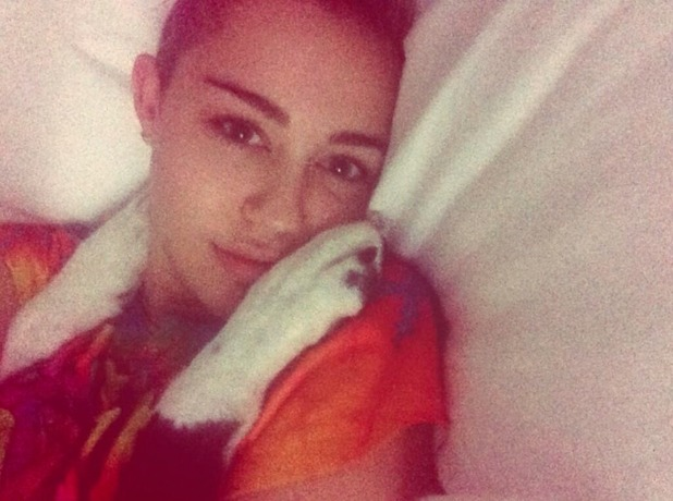Miley Cyrus shares snap with Twitter fans of her bed companion - her dog! Nov 2 2013