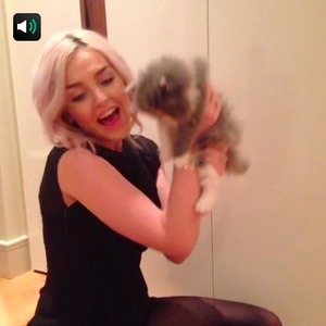 Perrie Edwards and Zayn Malik share picture of their new kitten on http://seenive.com/, November 8 2013