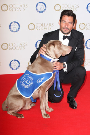 Collars & Coats Gala Ball, London, Britain - 07 Nov 2013 David Gandy