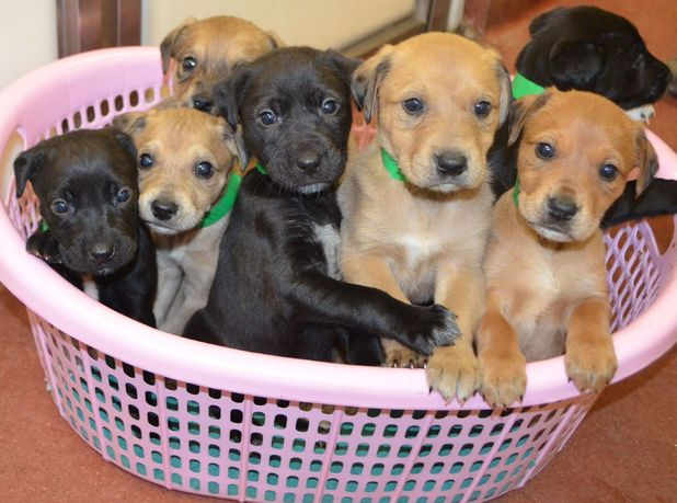 Litter of abandoned puppies