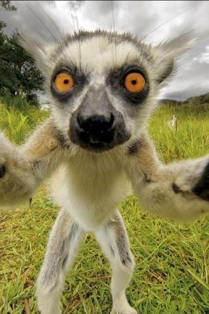 Animal selfies