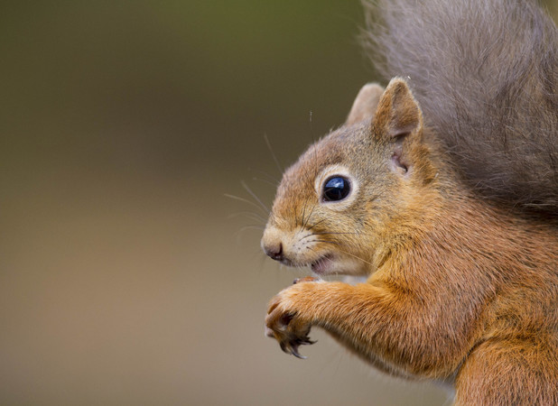 Margaret Bousfield, squirrel caused £7,000 worth of damage