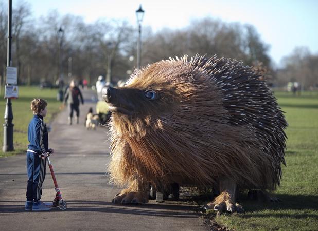 Giant hedgehog, Clapham Common