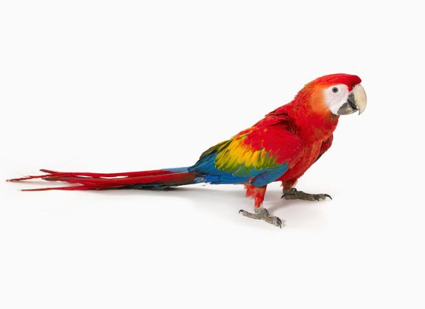 Hercule the parrot solves his owner's murder