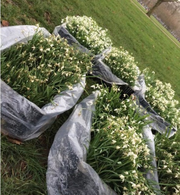 Victoria Beckham plants snowdrops in London's Hyde Park - 10 March 2014