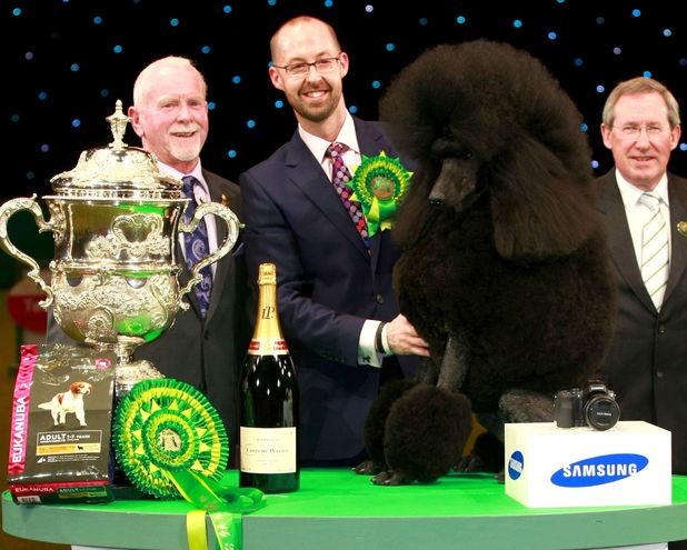 Ricky the poodle wins Crufts with his big 'fro