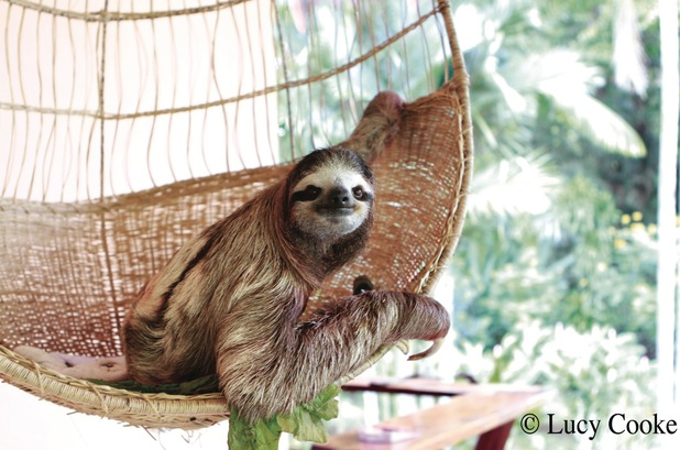 Power of sloth images