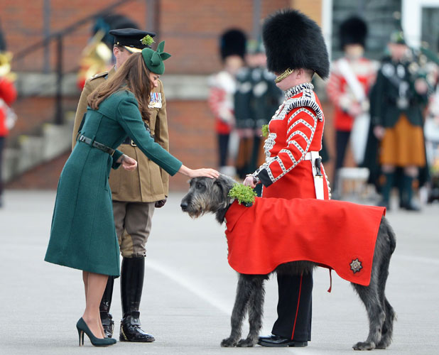 Catherine Duchess of Cambridge with the regimental mascot, an Irish Wolfhound 17 Mar 2014