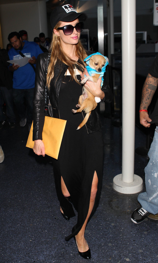 Paris Hilton arrives at LAX in Los Angeles with her pet dog Peter Pan - 2 April 2014
