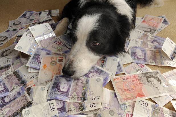 Pet dog with cash