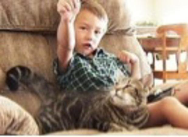 Jeremy Triantafilo, kitty saved toddler from dog attack