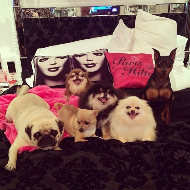 Paris Hilton posts an Instagram picture of her pet dogs while at home in Los Angeles, America - 30 May 2014