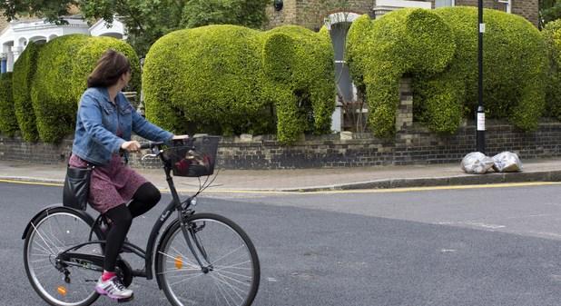 Elephant hedge by Tim Bushe 2