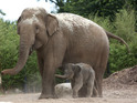 Baby elephant arrived at Dublin Zoo, 21 July 2014