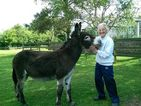 Heroic donkey saves owner from burglar!