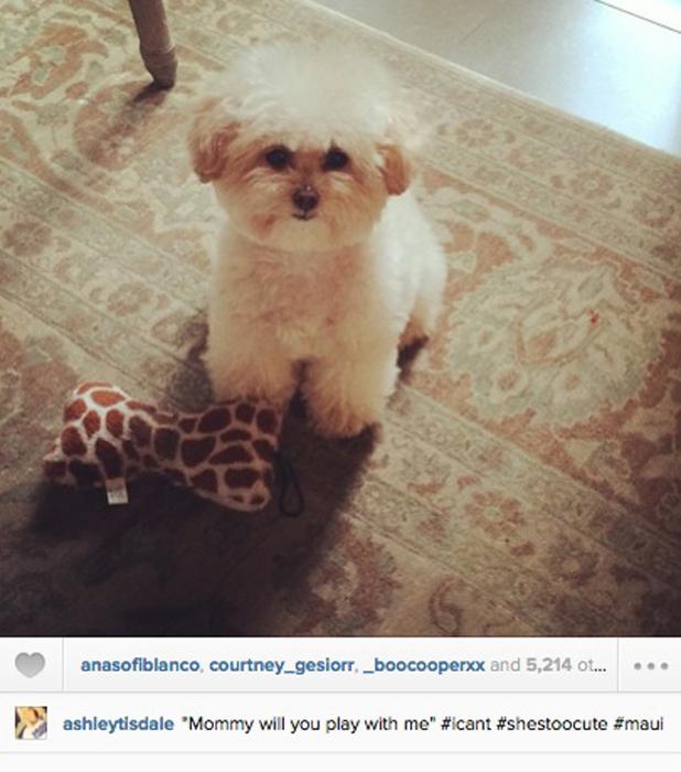 Ashley Tisdale's gorgeous pet puppy Maui, 4 August 2014