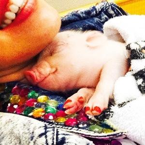 Miley Cyrus' pet piglet Bubba Sue, Instagram 11 August