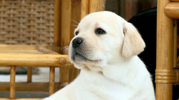 Star Paws: The Rise Of Superstar Pets, Wed 27 Aug
