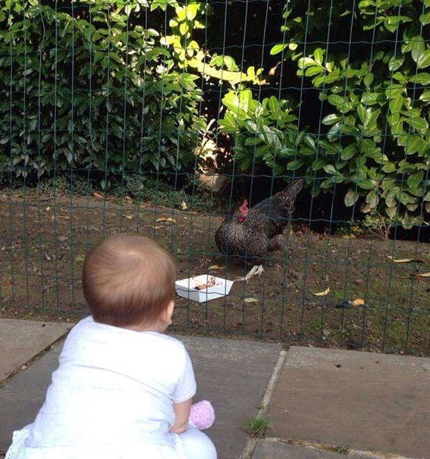 Peter Andre and Emily MacDonagh's baby Amelia seems enthralled by a chicken, 4 September 2014