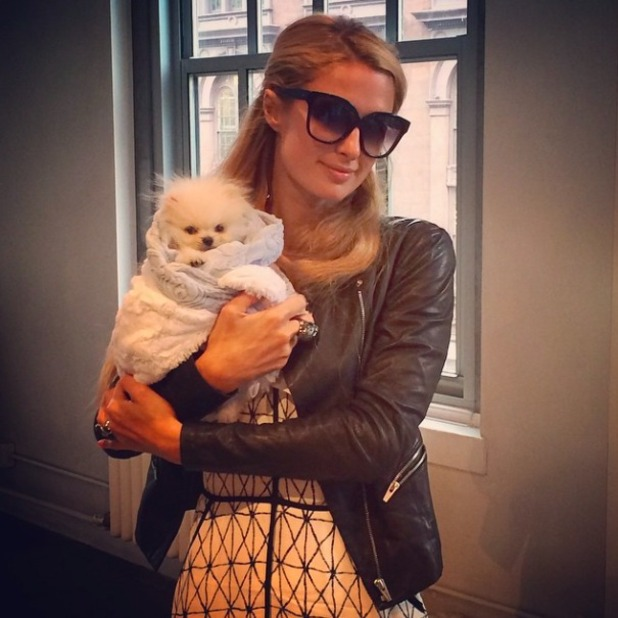 Paris Hilton and her cute new pup, 134 September 2014