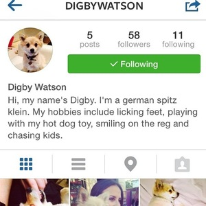 Lucy Watson sets up Digby her dog on Instagram 29 September