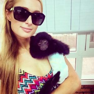 Paris Hilton makes some furry friends in Dubai, 11 October 2014