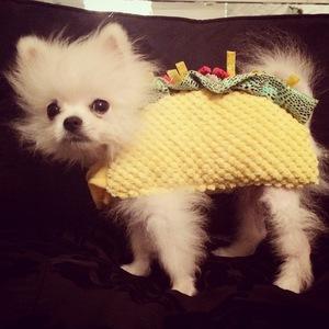 Paris Hilton's puppy Prince Hilton tries on Halloween costumes - 12 October 2014