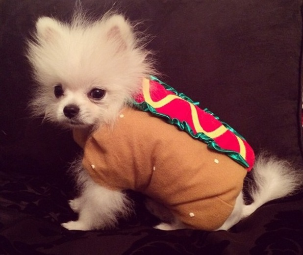 Paris Hilton's puppy Prince Hilton tries on Halloween costumes - 12 October 2014