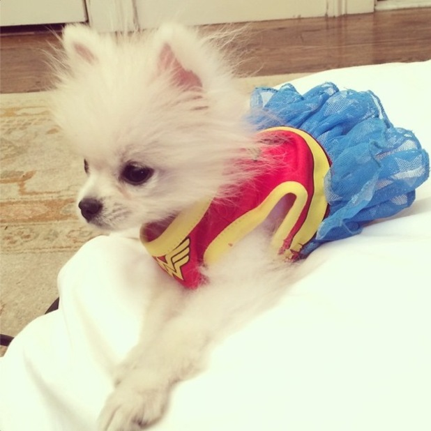 Prince Hilton The Pom wears a superhero outfit with a blue tutu - New York, America - 20 October 2014
