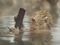 Cute and Funny winner from Marwell Wildlife's Photographer of the Year: Make a quick call - Suzie Tanser