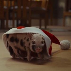 Piglet in McVitie's Christmas advert December