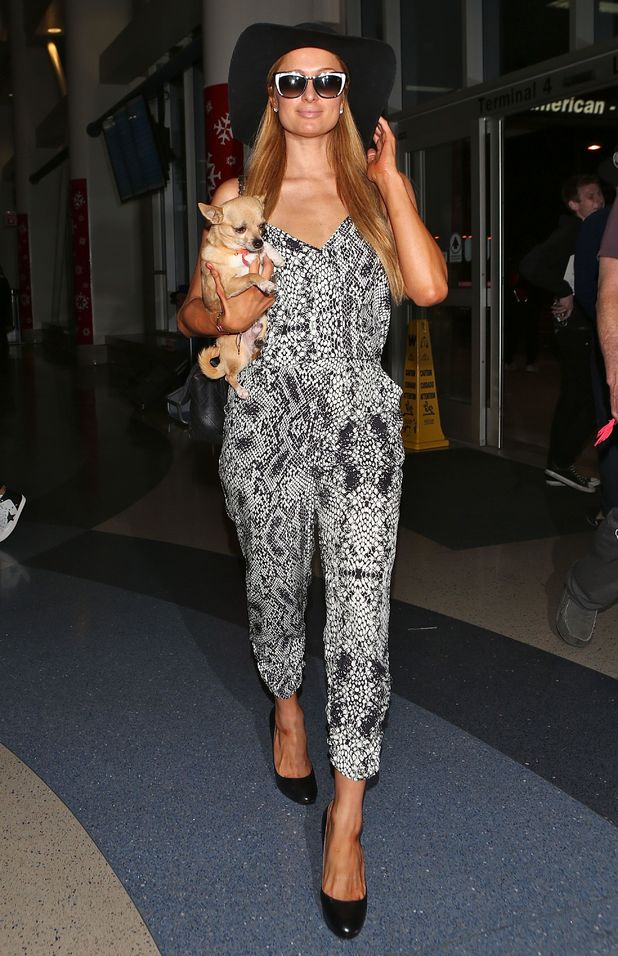 Paris Hilton arrives at Los Angeles International Airport with her pet dog Peter Pan - 2 December 2014