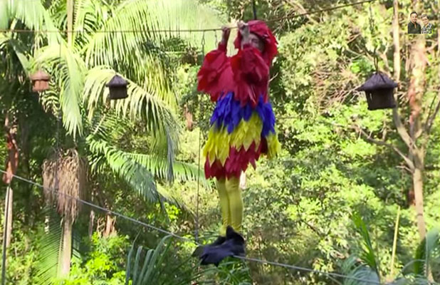 I'm A Celebrity 2014: Michael Buerk's bird challenge