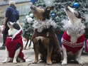 Battersea Dogs and Cats Home dress up dogs in Christmas jumpers 11 December