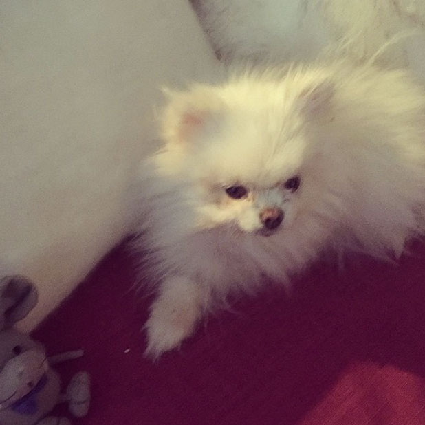 Lucy Mecklenburgh's dog Lola after losing a leg following surgery, Instagram snap, December 2014