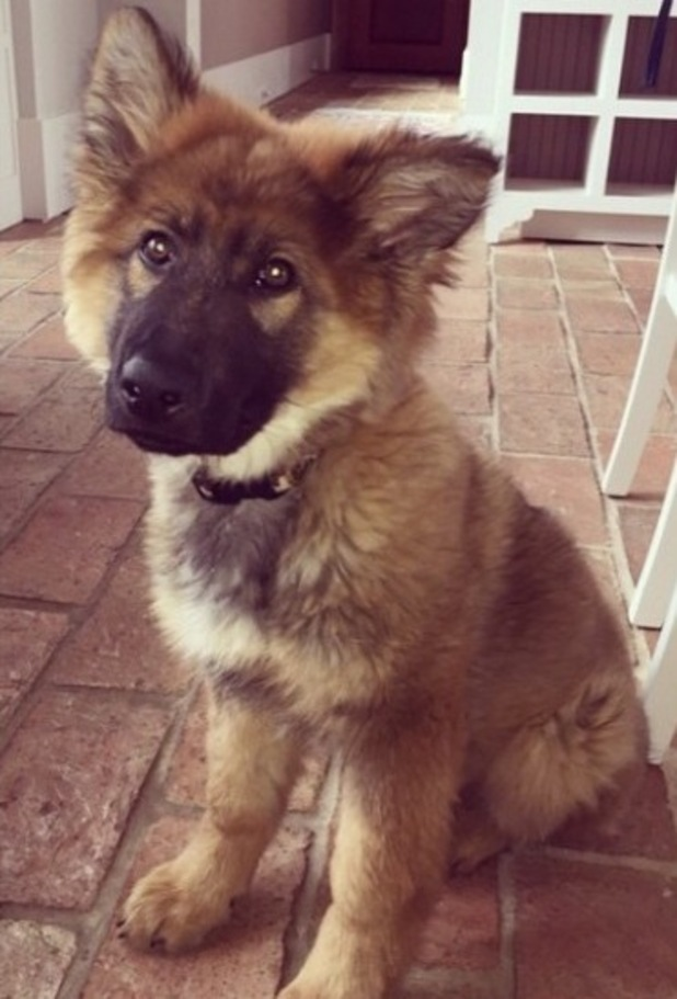Kristin Cavallari welcomes new dog into the family - 3 March 2015