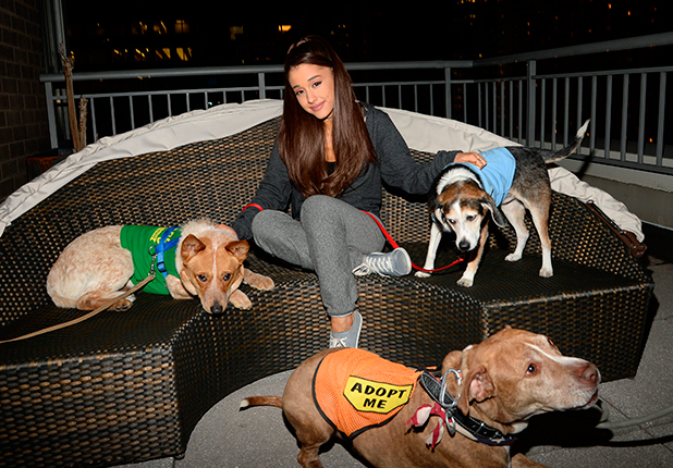 Ariana Grande at a dog shelter, New York, America - 19 Mar 2015