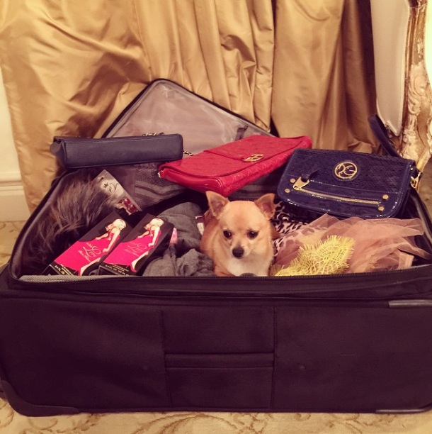 Paris Hilton's pooch hides in her suitcase before her trip to New York