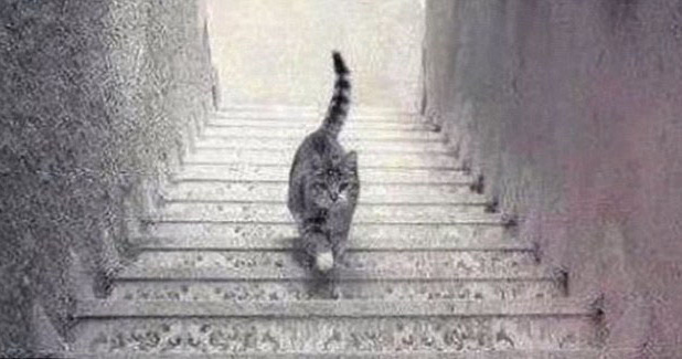 Is this cat going up or down the stairs?