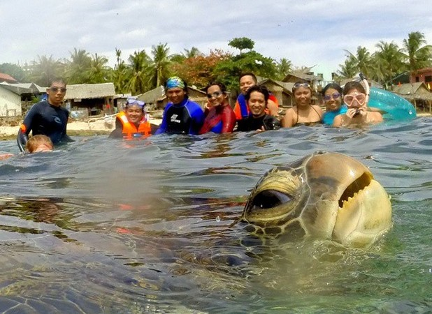 Turtle photobombs tourists' picture